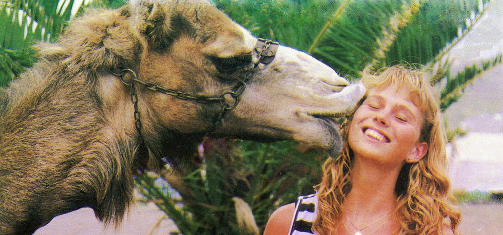 Camel Park med dromedarridning